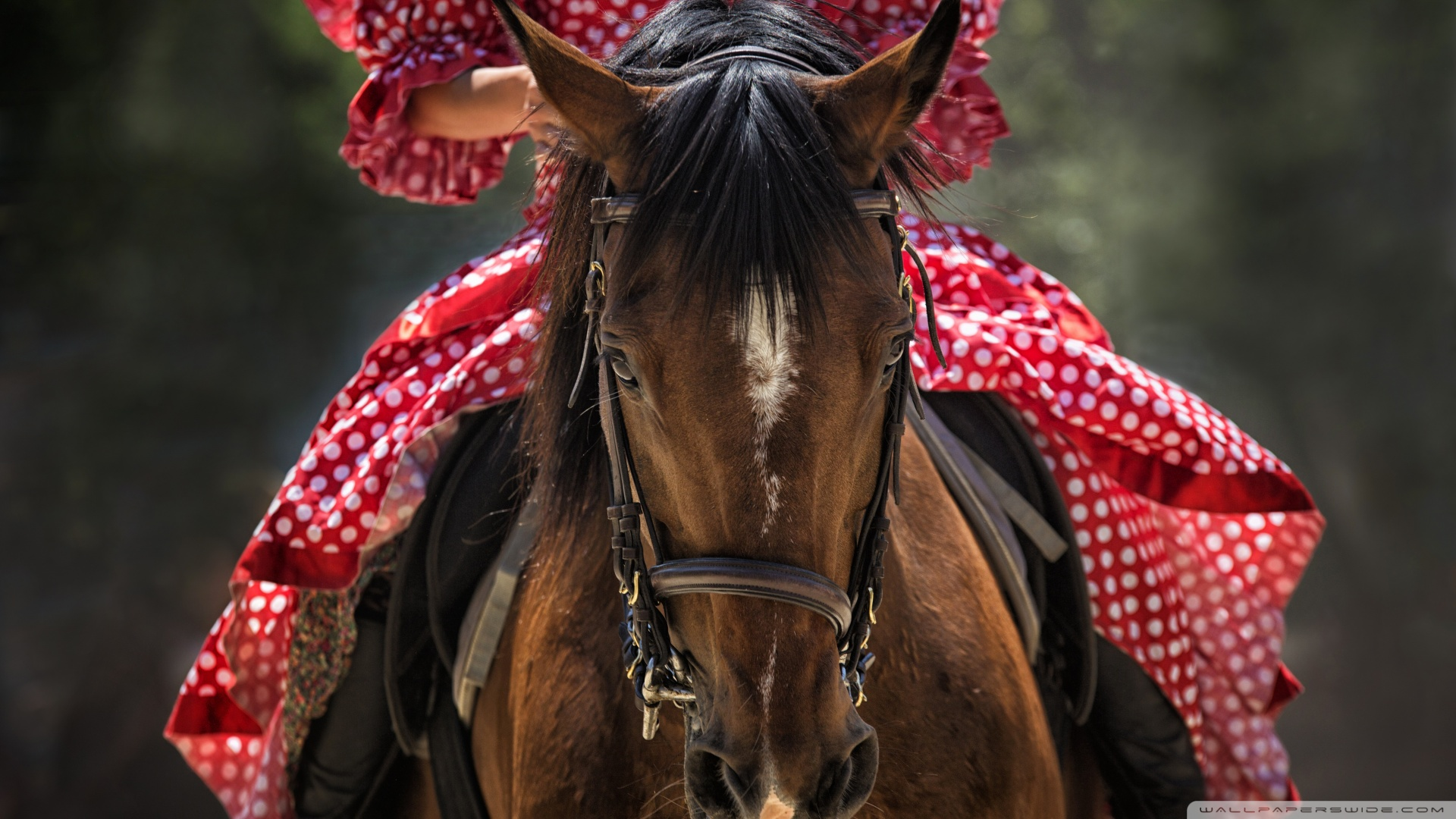 nő a lovon