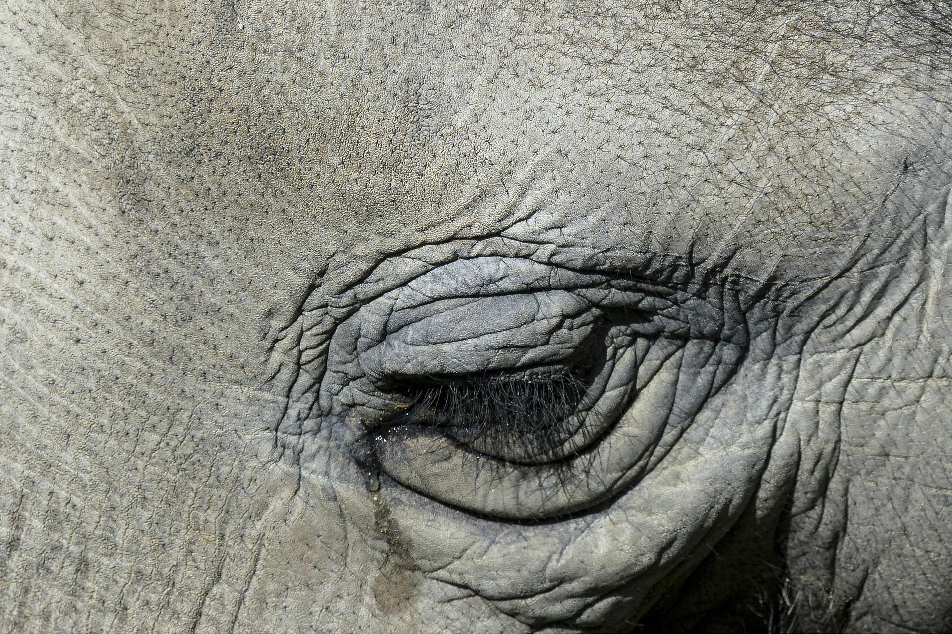 síró elefánt